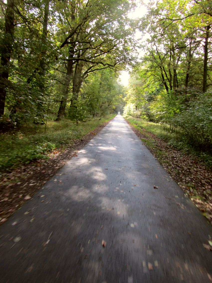 Segway-Waldtour